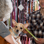Selected Experience in Animal and Pet Care
